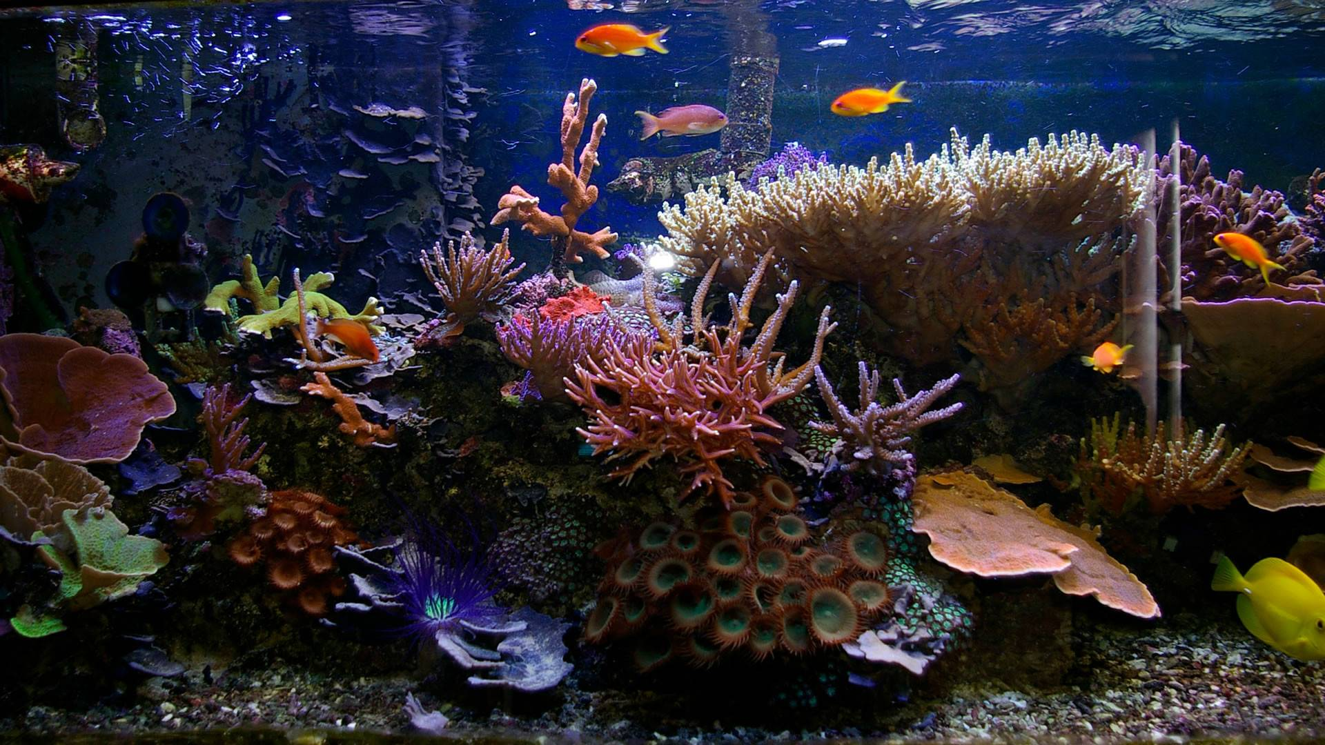 Popular Tropical Fish Home Aquariums Glass Tanks