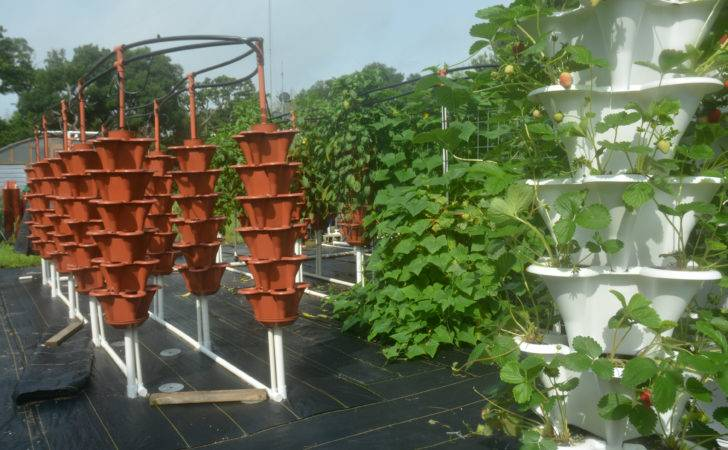 Pots Vertical Ezgro Garden System Waiting Filled