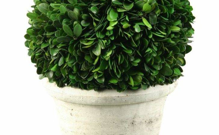 Preserved Boxwood Ball Topiary Stone Planter
