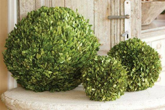 Preserved Boxwood Ball Traditional Plants