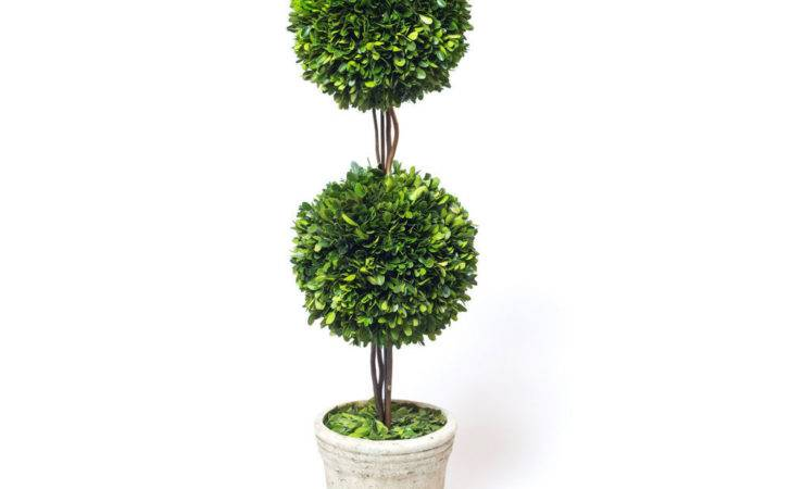 Preserved Boxwood Double Ball Topiary Inch Ebay