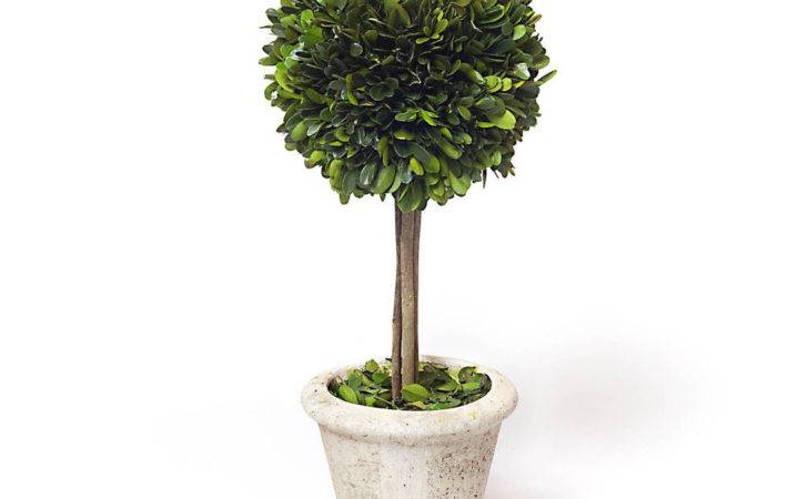 Preserved Boxwood Single Ball Topiary Inch Ebay