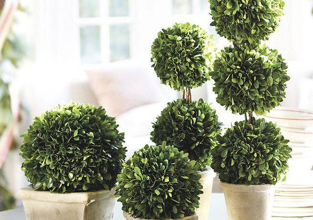 Preserved Boxwood Topiary Traditional Artificial Flowers Plants
