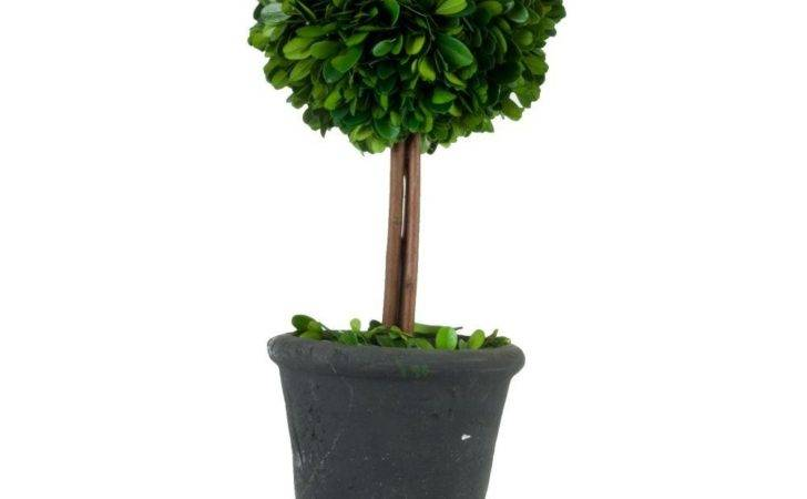 Pride Garden Products Preserved Boxwood Ball