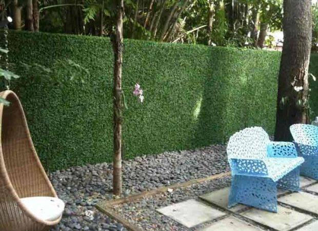 Privacy Fence Hedge Versusbattle
