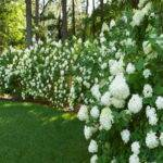 Privacy Hedges Ideas Beautiful