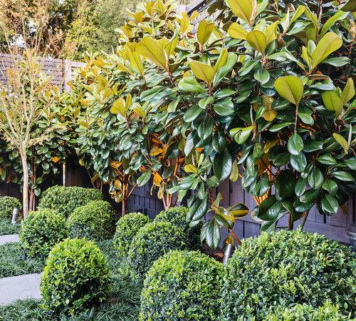Privacy Plants Block Out Neighbours