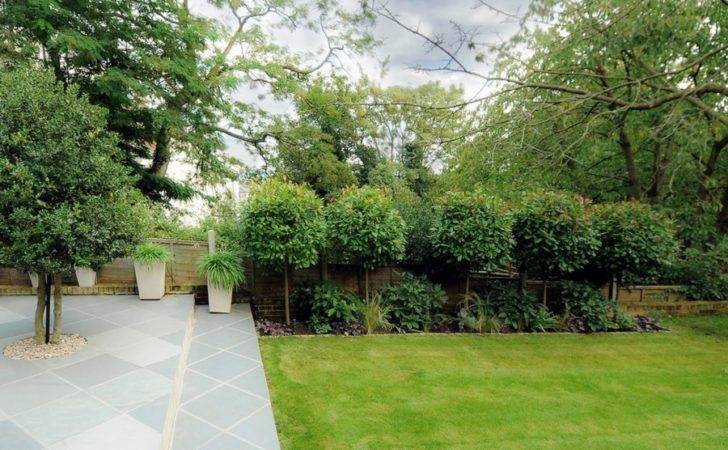 Privacy Trees Small Backyards Plants Screening Your