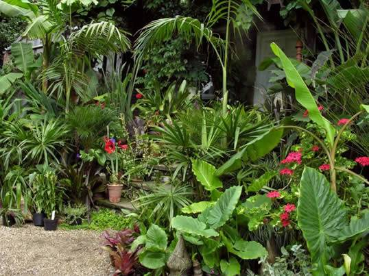 Protect Certain Plants Winter Exotic House