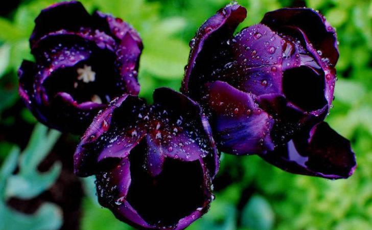 Purple Flowers Types