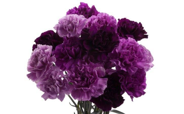 Purple Moon Carnations Name Flower Types Flowers Pintere