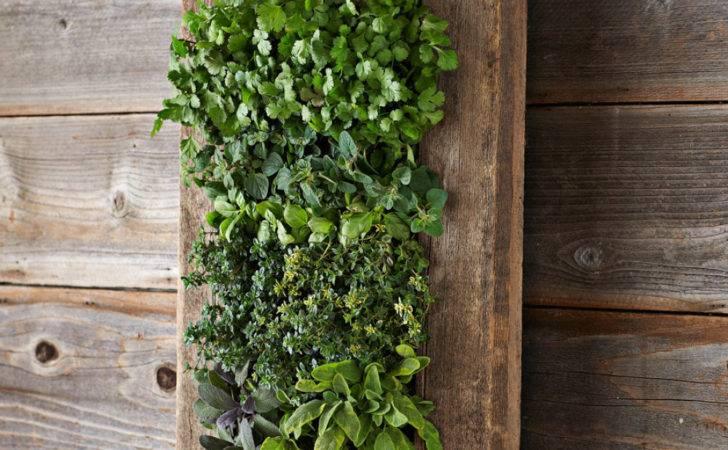 Reclaimed Barn Door Vertical Wall Planter Green Head