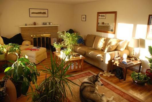 Room Interior Indoor Plants