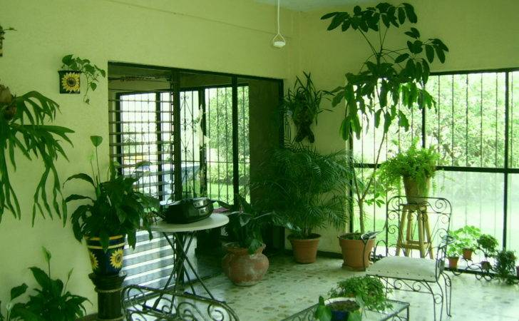 Rooms Plants