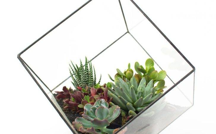 Rubix Welded Metal Glass Cube Terrarium Juicykits
