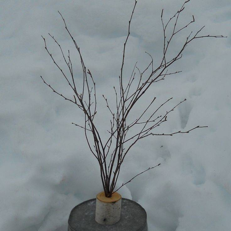Rustic Centerpiece Large Birch Branches Holiday Wedding Mantle Decor