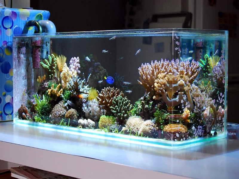 Saltwater Aquarium Design Ideas Cool