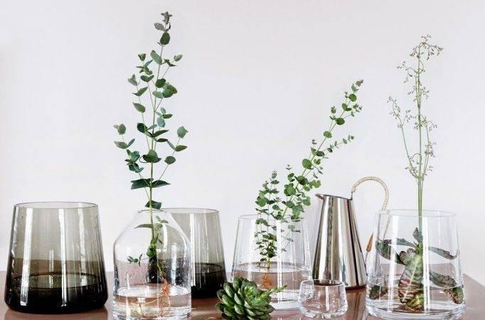 Scandinavian Interior Home Decor Plants