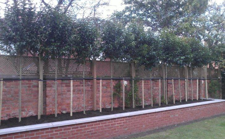 Screening Privacy Trees Fast Growing Shade Barcham