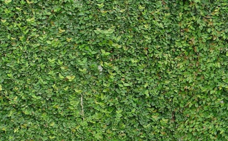 Seamless Side Wall Plant Covering
