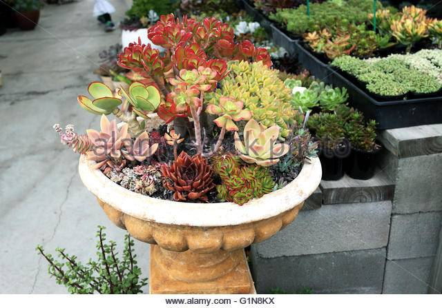 Selling Succulents Photos