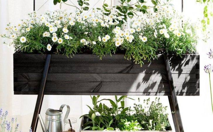 Short Guide Choose Right Plants Your Balcony