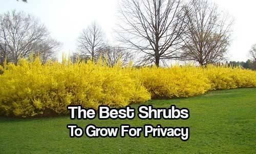 Shrubs Privacy Gardening Screen Outdoor