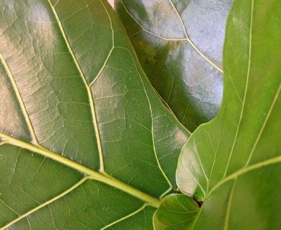 Similar Galleries Large Leaf Plants House