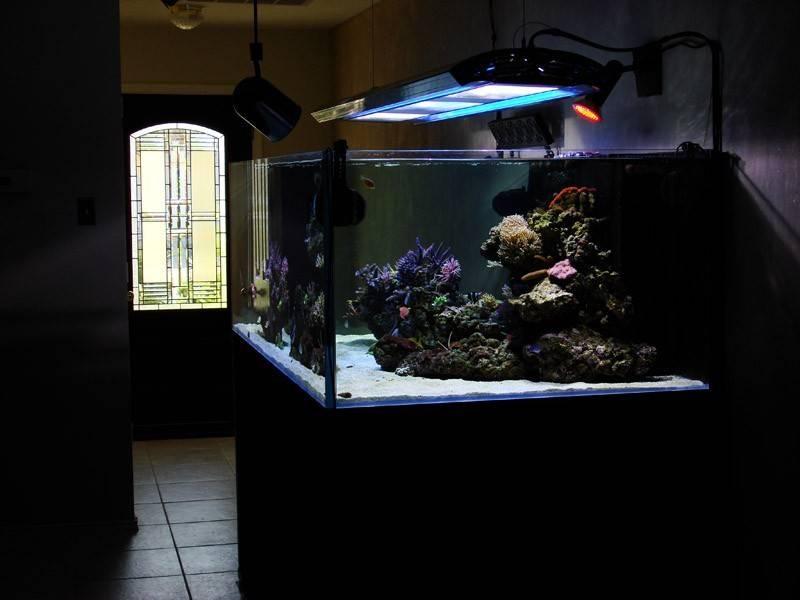 Simple Lighting Aquarium Design Ideas Photos