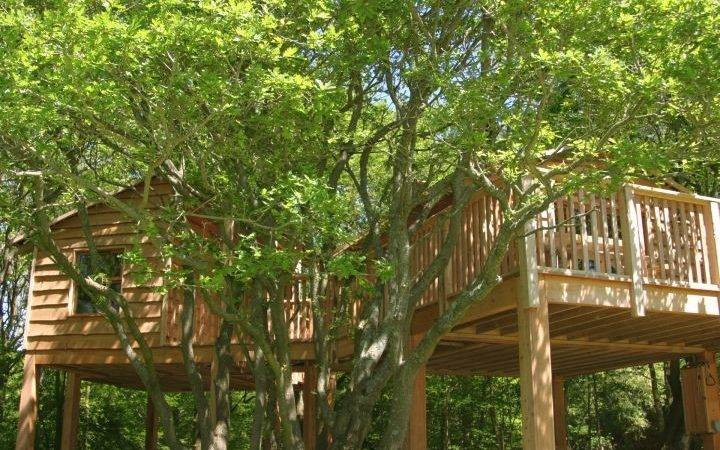 Simple Two Treehouse Stilts