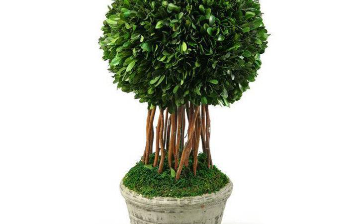 Single Ball Preserved Boxwood Topiary Round Ceramic Planter