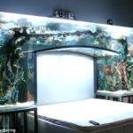 Sleeping Fishes Nfl Star Amazing Fish Tank His Bedroom
