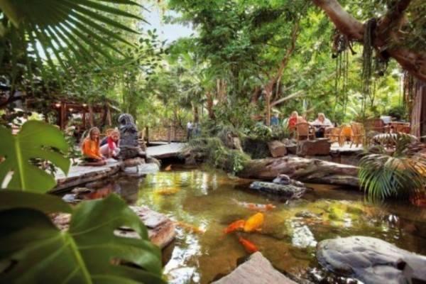 Small Tropical Garden Design Beautiful Homes