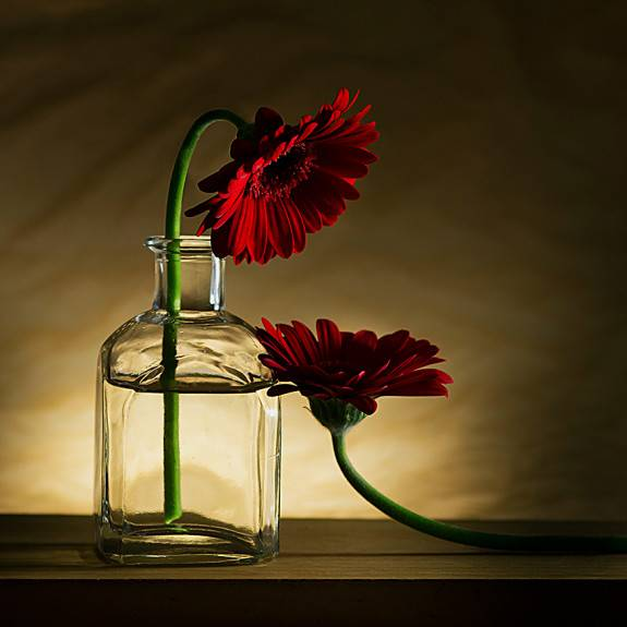 Still Life Photography Pinterest