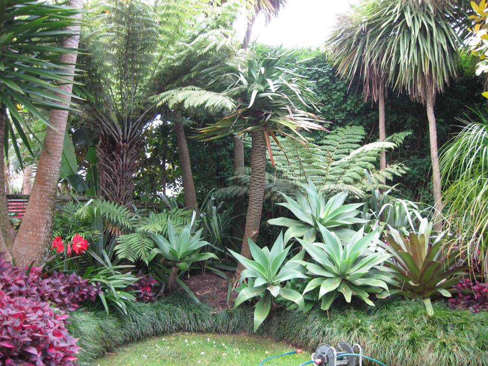 Sub Tropical Garden Landscape Design Care