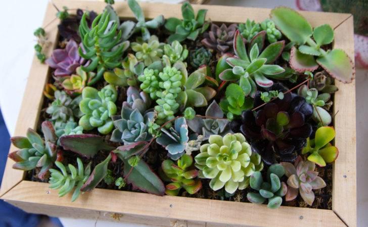 Succulent Cuttings Quality Nice Assortment Living
