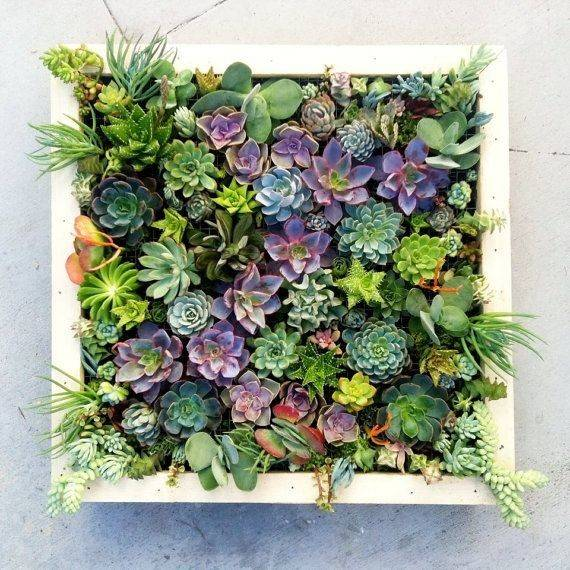 Succulent Living Wall Garden Walls Pinterest