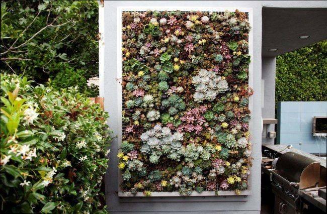 Succulent Living Wall Home Pinterest