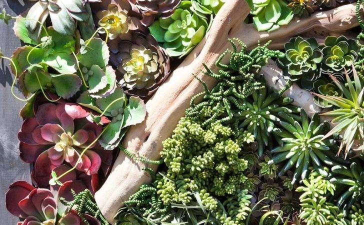 Succulent Living Wall Inl Inh Walls Premium Other