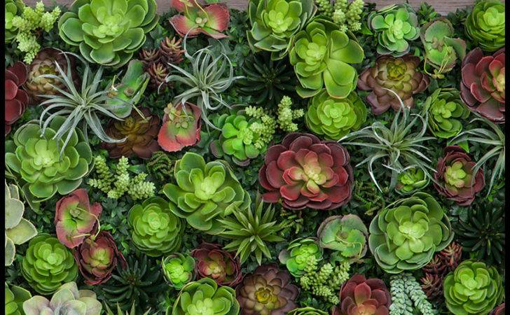 Succulent Living Wall Inl Inh