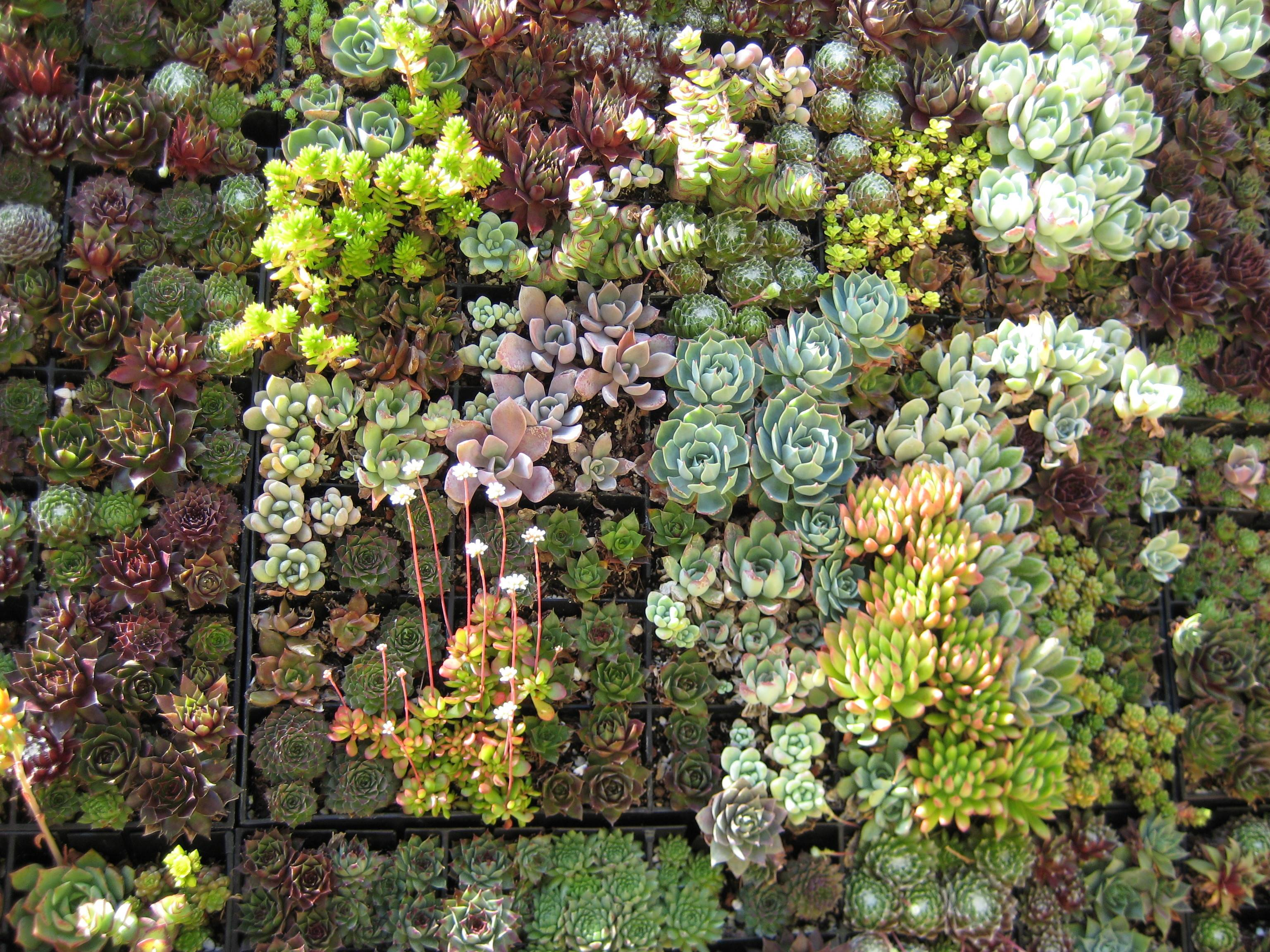 Succulent Living Wall Others Flora Grubb
