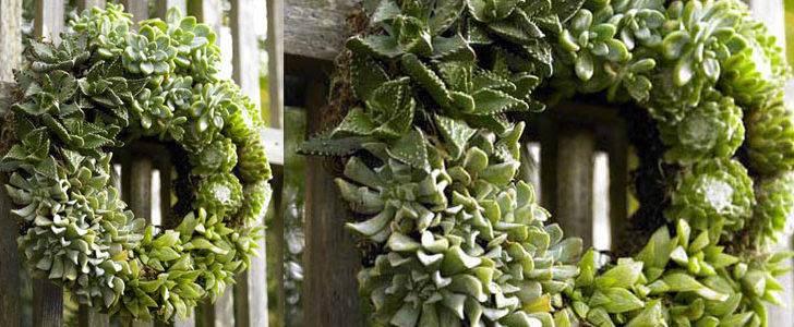 Succulent Living Wreath Green Head