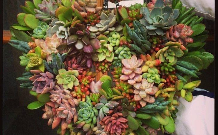 Succulent Living Wreath Wreaths Pinterest