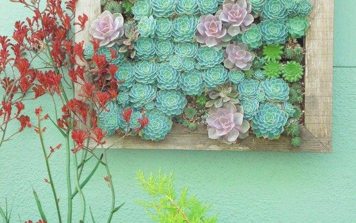 Succulents Living Wall Brushstrokes Pinterest