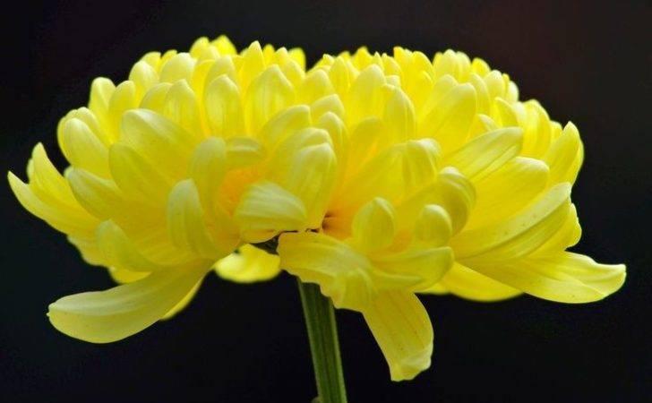 Sunshine Yellow Color Pinterest