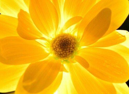 Sunshine Yellow Flowers Pinterest