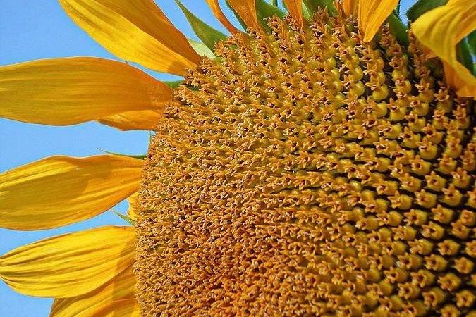 Sunshine Yellow Photograph Lilliana Mendez Which Uploaded