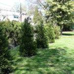Superb Landscaping West Chester Leyland Cypress Landscape