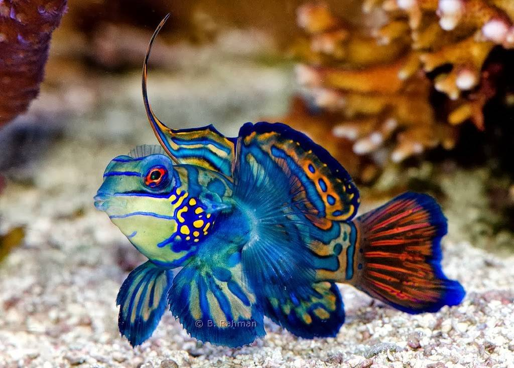 Sure Stop These Awesome Exotic Saltwater Fishes