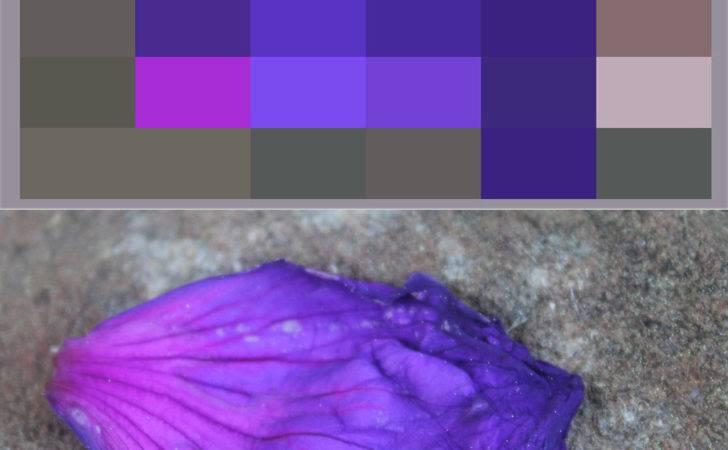 Swag Monochromatic Color Scheme